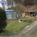 Biologisches Gemüse und Salat wird im Garten der Casa Medica angebaut und ergänzt die Wirkung der Quellwasser-Dauerbrause.